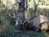 shawn-elk-07-021